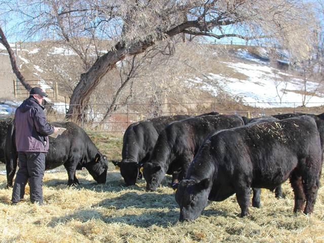 Ranchers are used to challenges beyond their control, yet they realize they have go on about business in the most normal fashion possible. (Photo by ShayLe Stewart)