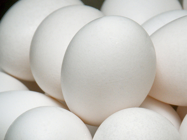 As a result of the 2010 salmonella outbreak, Quality Egg recalled eggs that had been shipped from five of its six Iowa farms between May and August 2010. (Photo by MSU Ag Communications/Scott Corey)