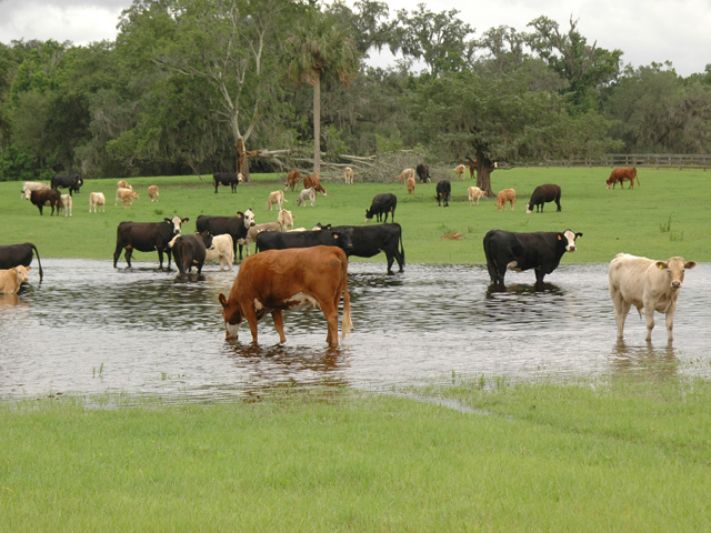 Farm groups argue the waters of the U.S. rule will allow EPA and the Corps to demand farmers apply for permits to conduct basic farming practices because the land could have vernal pools or ditches that fill during heavy rains. (DTN/The Progressive Farmer file photo)