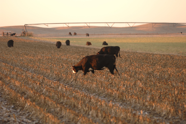 The Crop Residue Exchange is designed to assist both crop and livestock producers with crop residue needs. (DTN/The Progressive Farmer file photo by Jim Patrico)