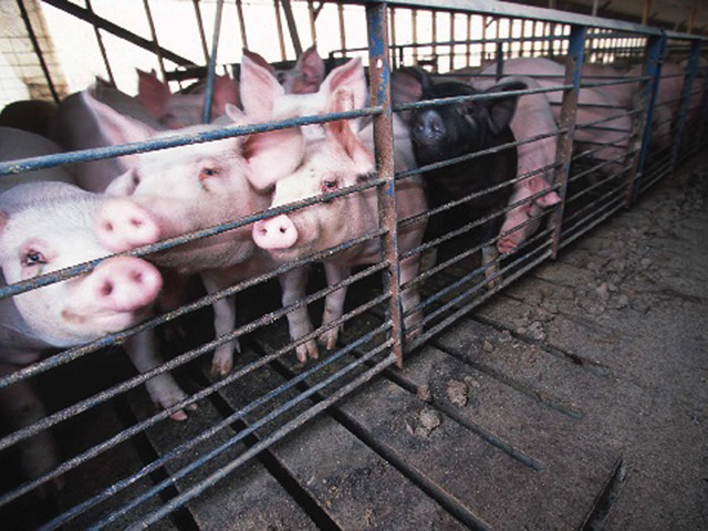 China announced Monday it was going through with a 25% increase on tariffs against an array of U.S. agricultural products, including pork. That sent hog futures limit down on some CME contracts. (DTN file photo)