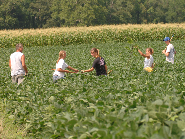 A family walks soybeans. Will the next generation of farmers even know what walking beans was? (DTN photo by Jim Patrico)