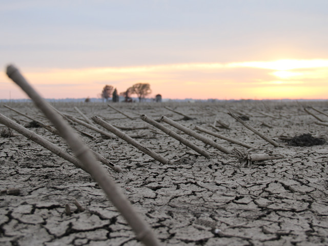 Leaving prevented planting acres bare this summer can lead to serious problems with soil erosion, nutrient loss, and weed control, agronomists warn. (DTN photo by Elaine Shein)