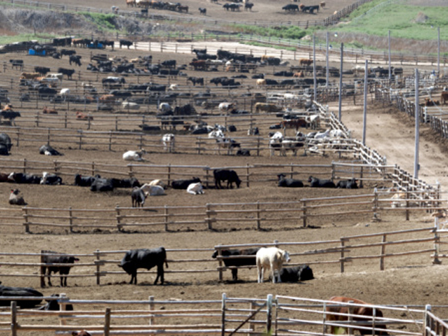 Green Plains Inc. will expand its feedlot business with a purchase from Cargill. (DTN file photo)
