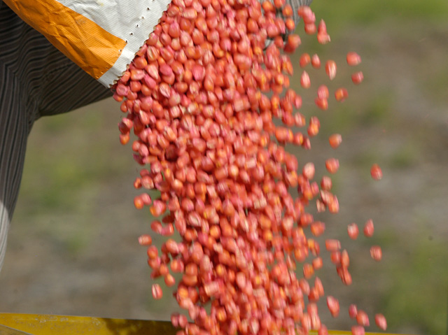 Mycogen Seeds is moving away from the trait-driven seed pricing strategy in hopes of re-establishing the connection between commodity value and seed price. (DTN/Progressive Farmer file photo)