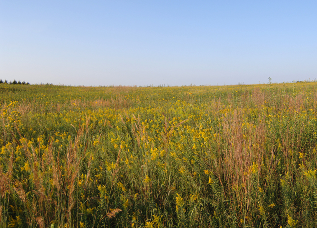 A Nebraska farm that specializes in wildlife habitat. Senators want USDA to restart allowing producers to include wildlife habitat enhancements under a farm-bill program as part of the Conservation Reserve Program. USDA stopped implement the State Acres for Wildlife Enhancement (SAFE) program in 2017. (DTN file photo by Jim Patrico)