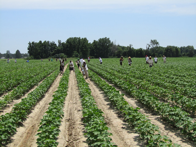 H-2A workers will be allowed into the U.S. from Mexico even during a border closure, but the American Farm Bureau Federation and others are still concerned about the loss of new visas and workers from outside of Mexico. (DTN file photo)