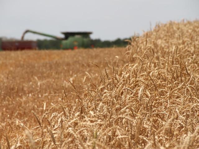 In its Small Grains Summary report on Friday, USDA increased all-wheat production by 1.4 million bushels from the last report. (DTN file photo by Pamela Smith)