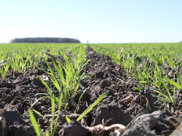 In the 2016-17 crop year, farmers planted the smallest wheat crop in recorded U.S. history; now they are making decisions for the 2017-18 crop, and the market isn't promising. (DTN photo by Elaine Shein)