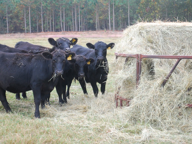 Hay feeders can save 30% to 40% from waste, compared to feeding on the ground. (Progressive Farmer photo by Boyd Kidwell)