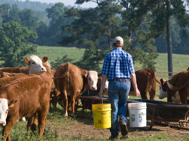 Profiting from future market prices for cattle is an operation-by-operation decision this year, directly tied to cost and ability to carry them through the winter without losing body condition. (PF photo by Victoria G. Myers)