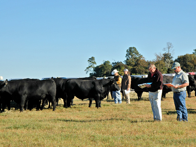 Bull-buying may seem overly complicated these days, but selection indices can help narrow the field. (PF photo by Becky Mills)