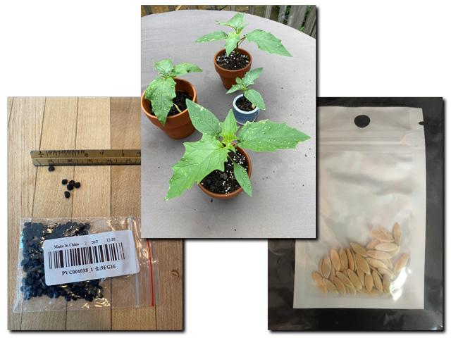 These are examples of some of the plant-related materials that have been arriving in mailboxes unsolicited from China. It's important that those receiving packages do not plant or discard the seeds. (Photo courtesy of APHIS)