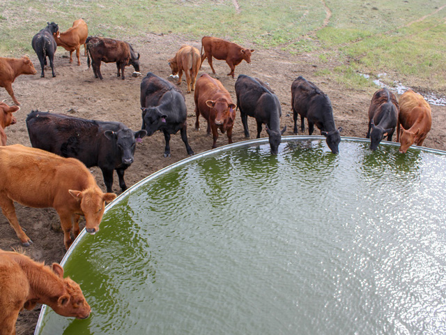 Quickly spotting a problem with a water source helps any cattle operation run more smoothly.(University of Nebraska photo by Troy Walz)